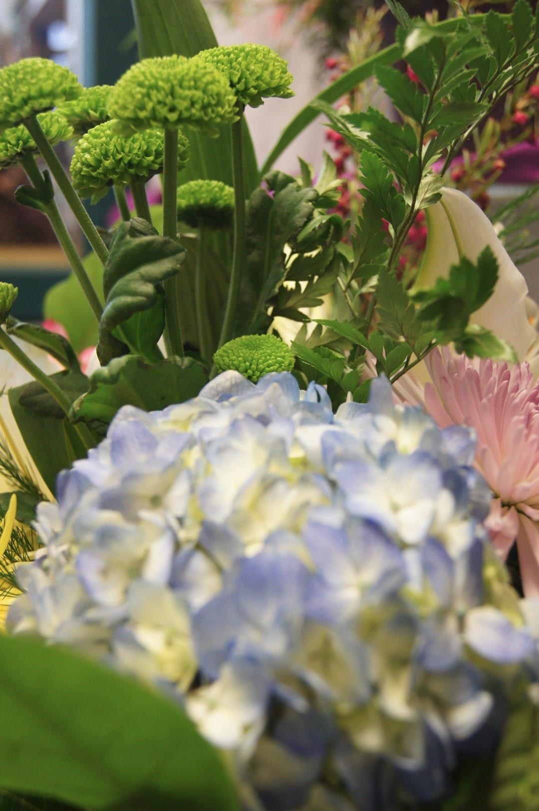 Blue Hydrangea Mix Pink Green